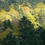 automne en vallée de Rioumajou Hautes Pyrénées