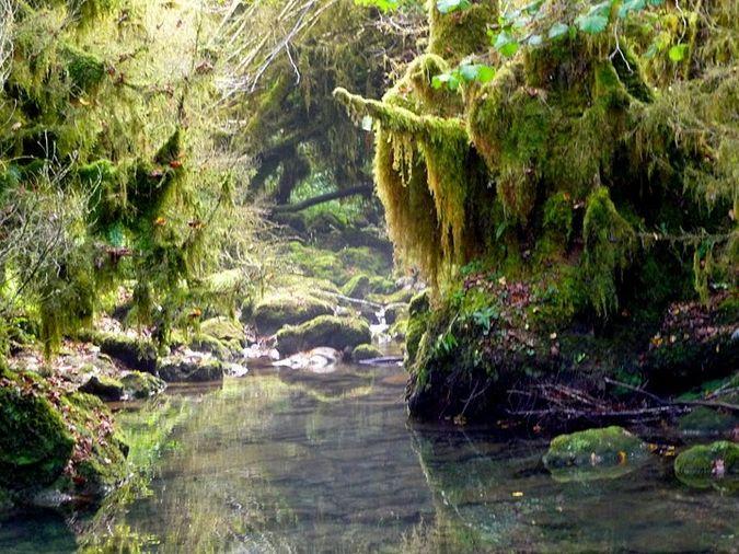 Petite Amazonie dans les Pyrénées (Baronnies)