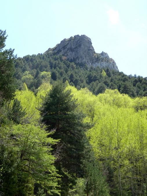 Vert printanier à Tella - Sobrarbe - Aragon
