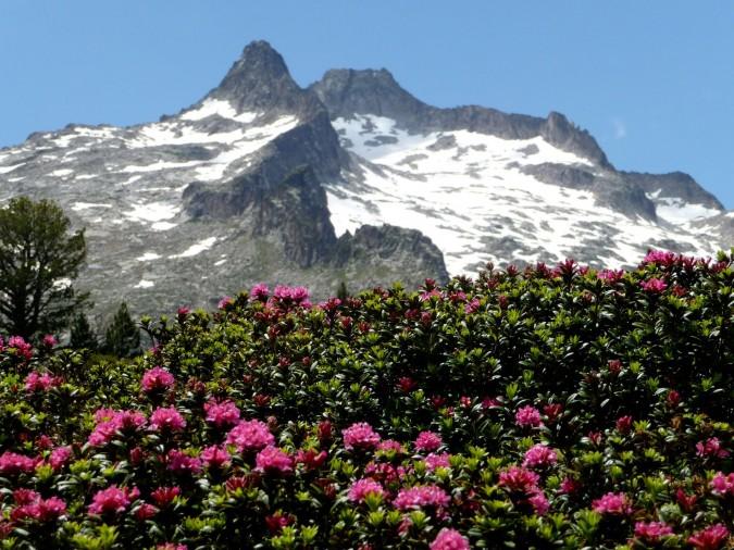 Vallée d'Aure : Néouvielle et ses névés avec en premier plan des rhododendrons