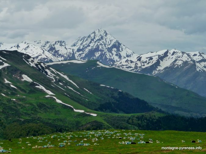 troupeau de brebis paissant face au Pic du midi de Bigorre
