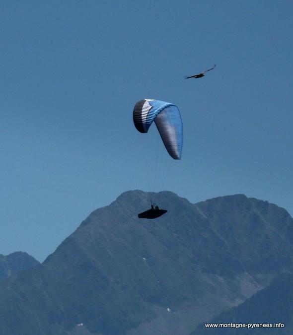 vautour et parapentes dans le ciel de la vallée d'Aure