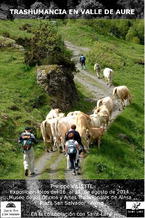 transhumance en vallée d'Aure Hautes-Pyrénées