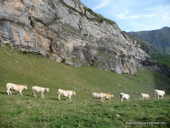 transhumance en haute vallée d'Aure Pyrénées