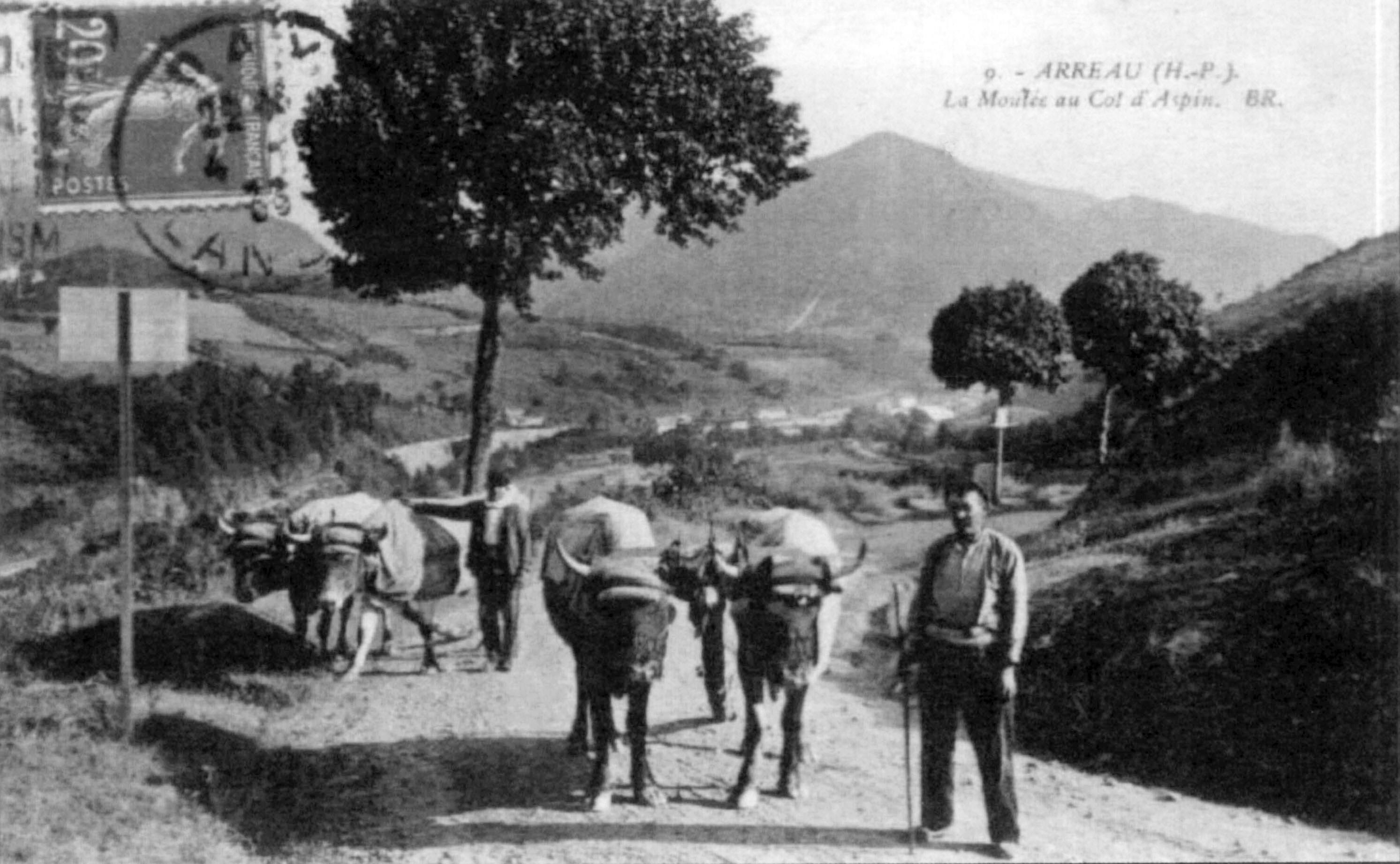Attelage sur la route du col d'Aspin