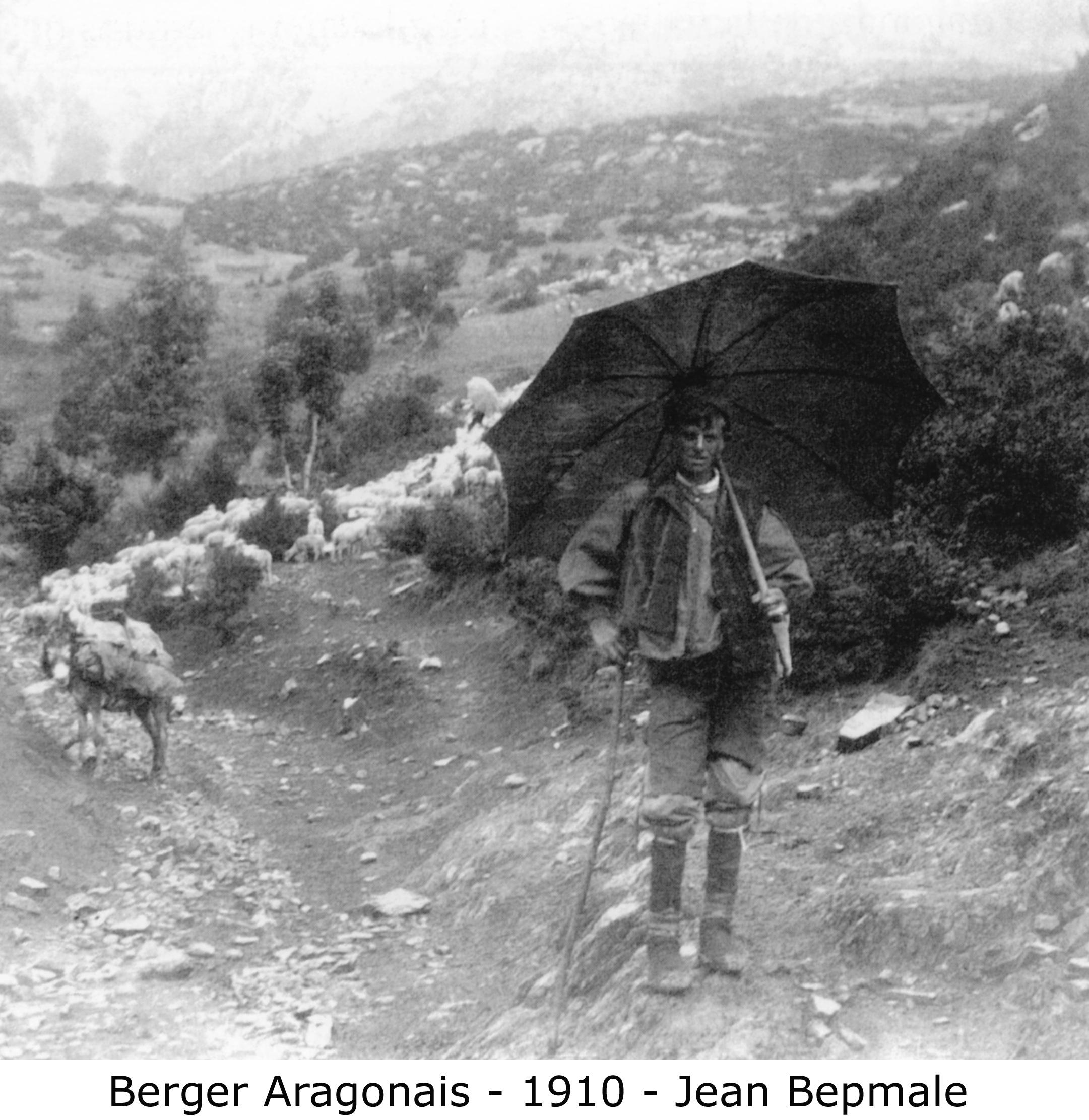 berger aragonais