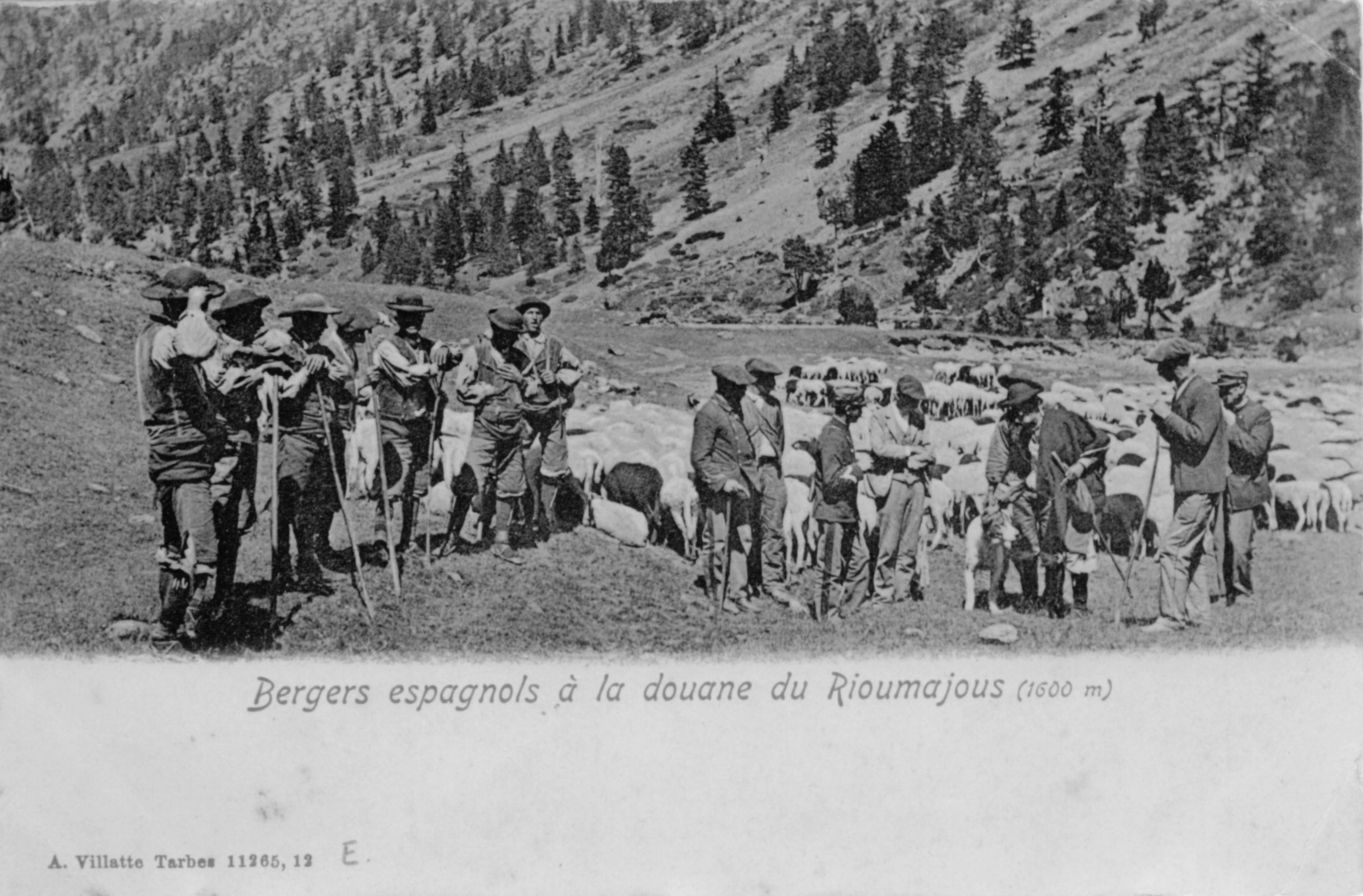 Les bergers et la douane